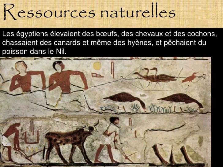 Ressources naturelles Les égyptiens élevaient des bœufs, des chevaux et des cochons, chassaient des canards et même des hy...