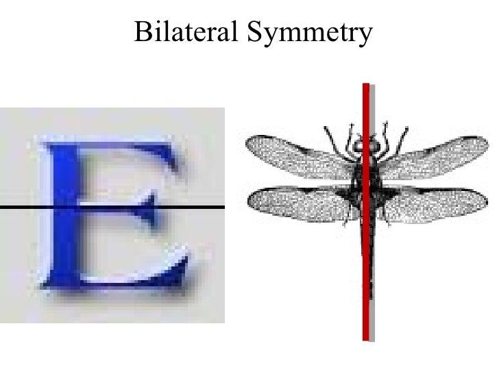 �9ᢹi&�l$zd�y.9b_H0.9bHonorsGeometrySymmetryReview
