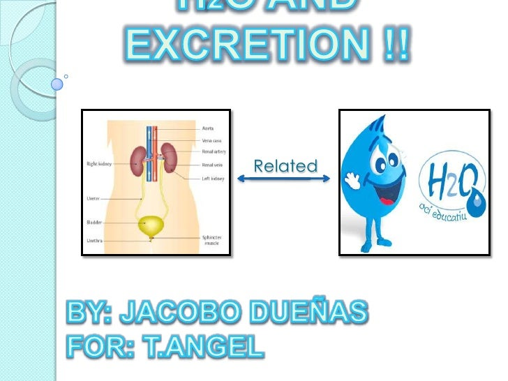 H2O AND EXCRETION !!<br />Related <br />BY: JACOBO DUEÑAS<br />FOR: T.ANGEL <br />