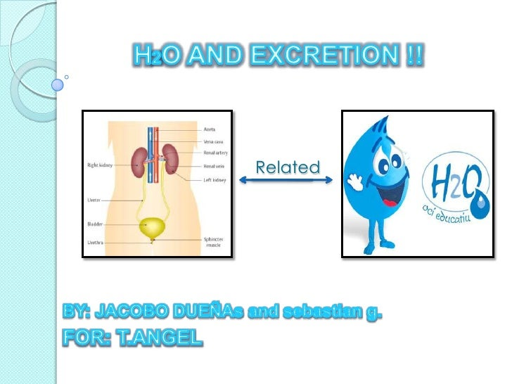 H2O AND EXCRETION !!<br />Related <br />BY: JACOBO DUEÑAs and sebastian g.<br />FOR: T.ANGEL <br />