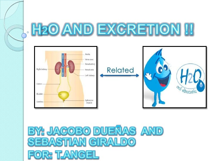H2O AND EXCRETION !!<br />Related <br />BY: JACOBO DUEÑAS  AND SEBASTIAN GIRALDO<br />FOR: T.ANGEL <br />