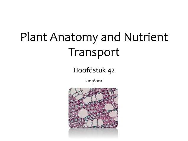 Plant Anatomy and Nutrient Transport Hoofdstuk 42 2010/2011