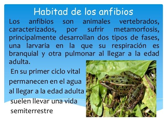 Habitad de los anfibios - Como se alimentan las medusas ...