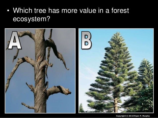 • Which tree has more value in a forest ecosystem? Copyright © 2010 Ryan P. Murphy