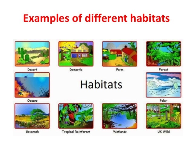 Science - How animals adapt to aquatic habitat - English - YouTube