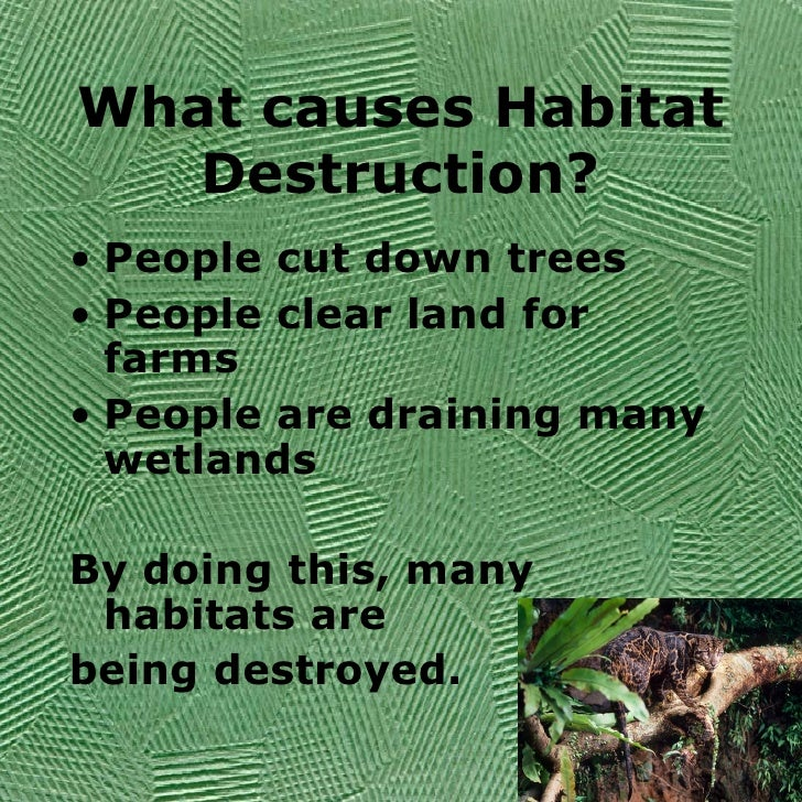 animals biodiversity and natural habitat Species diversity ensures ecosystem resilience, giving ecological  occur in  nearly every habitat on the planet and are often the most visible and familiar  wildlife.