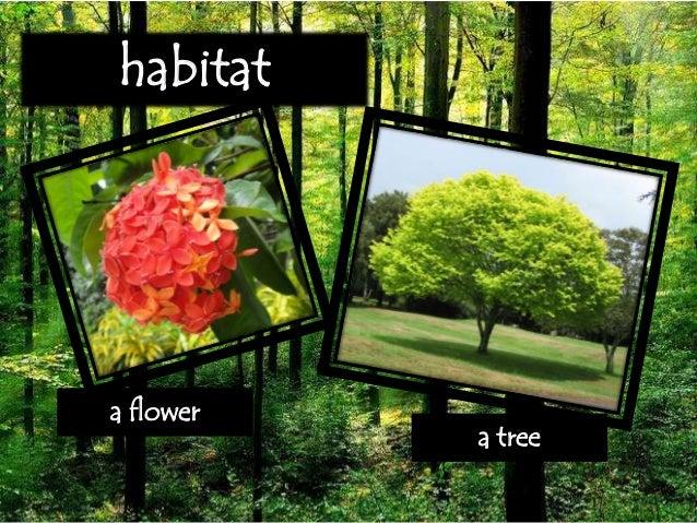 Habitat And Niche Report