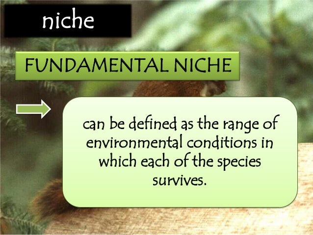fundamental and realized niche pdf