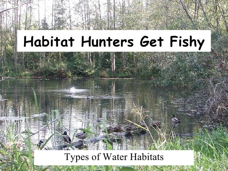 Habitat Hunters Get Fishy Types of Water Habitats