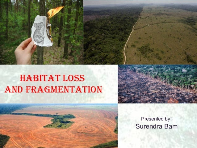 Habitat lossand fragmentation                     Presented by;                    Surendra Bam