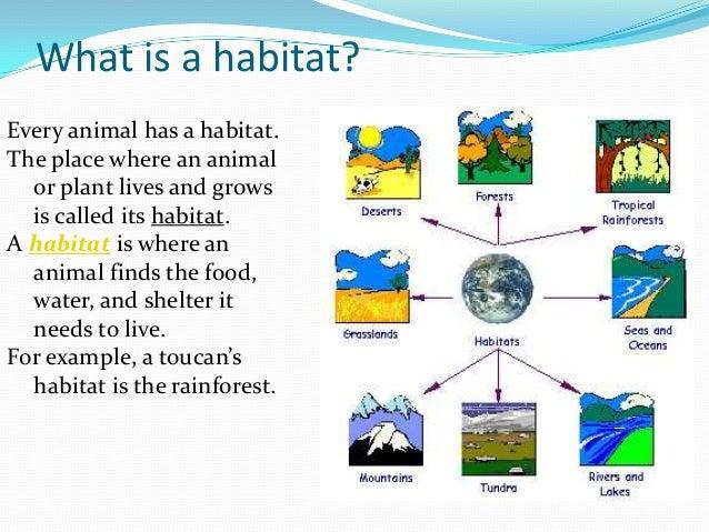 Habitat of the living