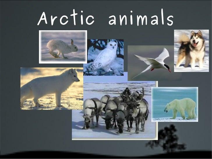 Animals Habitats