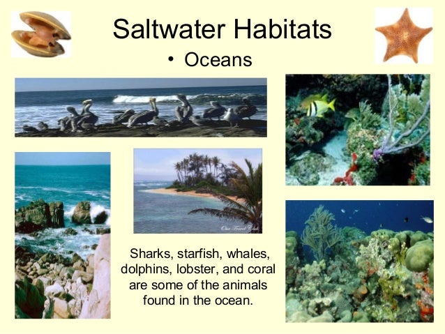 Saltwater Habitats • Oceans Sharks, starfish, whales, dolphins, lobster, and coral are some of the animals found in the oc...