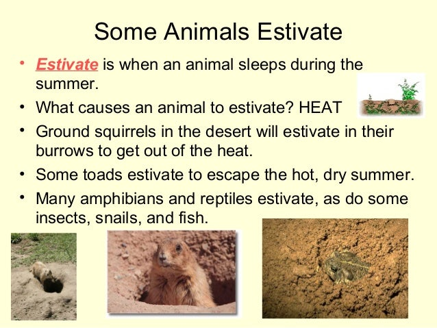 Some Animals Estivate • Estivate is when an animal sleeps during the summer. • What causes an animal to estivate? HEAT • G...