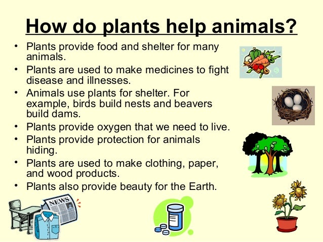 How do plants help animals? • Plants provide food and shelter for many animals. • Plants are used to make medicines to fig...