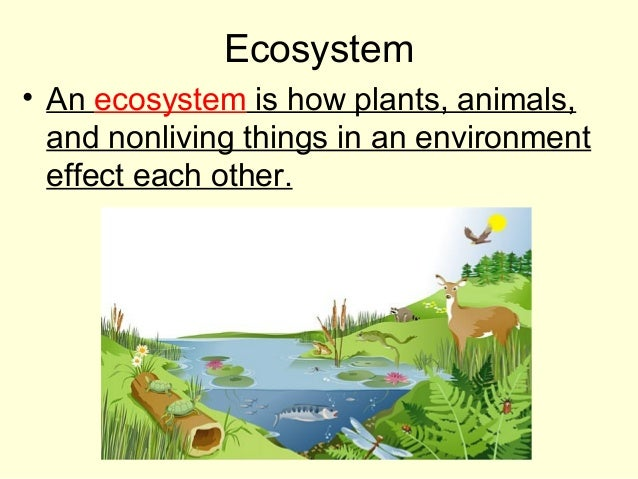 Ecosystem • An ecosystem is how plants, animals, and nonliving things in an environment effect each other.