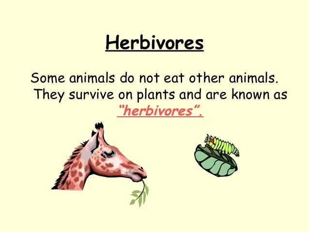 """Herbivores Some animals do not eat other animals. They survive on plants and are known as """"herbivores""""."""