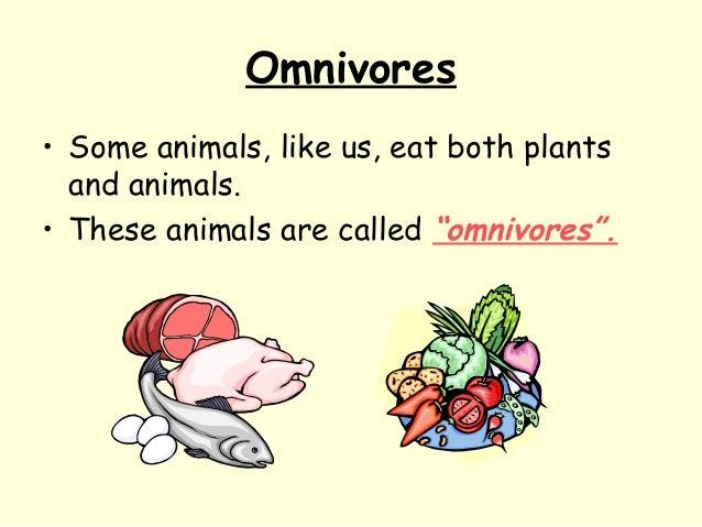 "Omnivores • Some animals, like us, eat both plants and animals. • These animals are called ""omnivores""."