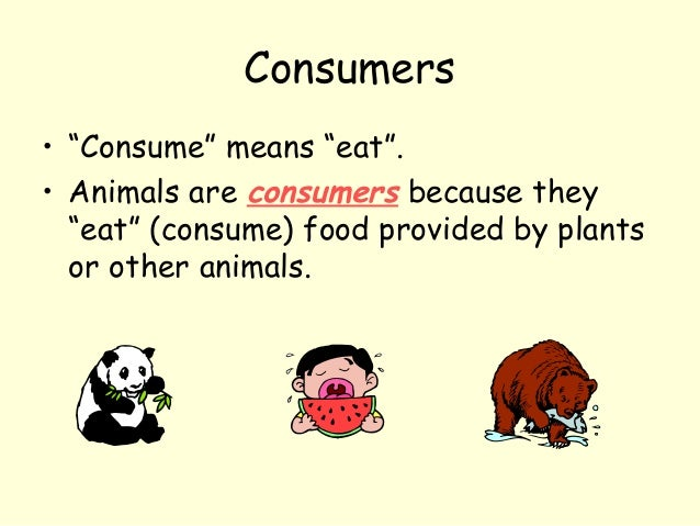 """Consumers • """"Consume"""" means """"eat"""". • Animals are consumers because they """"eat"""" (consume) food provided by plants or other a..."""