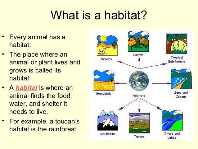 Habitats for plants and animals