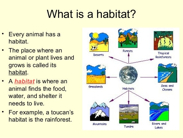 Habitats For Plants And Animals on Types Of Homes Worksheet