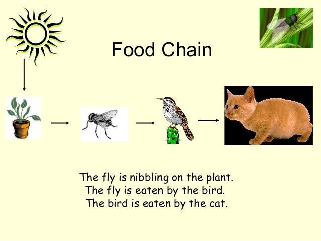 Food Chain Fox Cat
