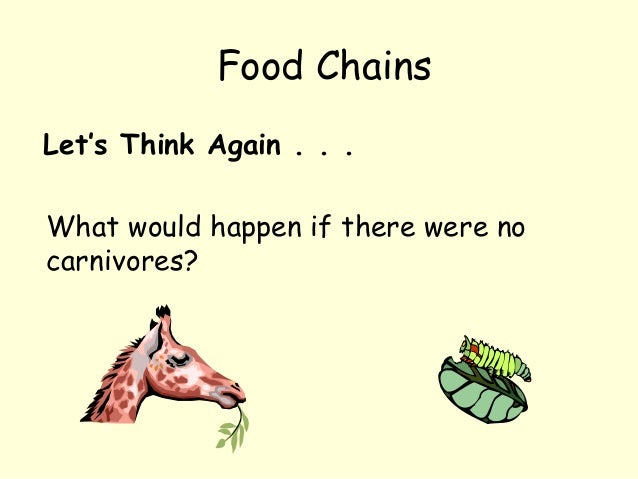 Let's Think Again . . . What would happen if there were no carnivores? Food Chains