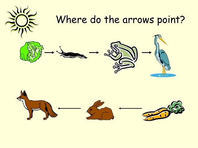 Where do the arrows point?
