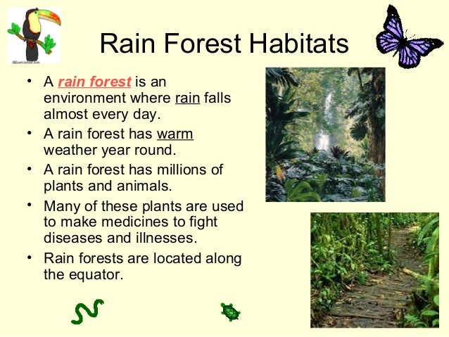 Rain Forest Habitats • A rain forest is an environment where rain falls almost every day. • A rain forest has warm weather...
