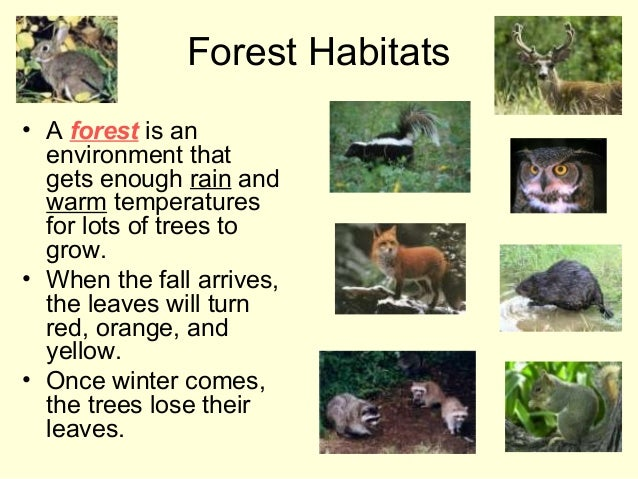 Forest Habitats • A forest is an environment that gets enough rain and warm temperatures for lots of trees to grow. • When...
