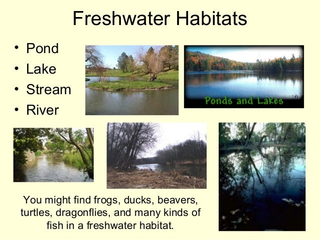 Freshwater Habitats • Pond • Lake • Stream • River You might find frogs, ducks, beavers, turtles, dragonflies, and many ki...