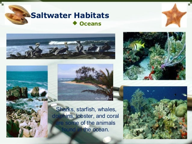 Saltwater Habitats  Oceans Sharks, starfish, whales, dolphins, lobster, and coral are some of the animals found in the oc...