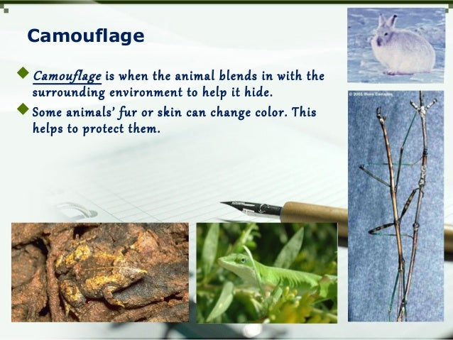 Camouflage Camouflage is when the animal blends in with the surrounding environment to help it hide. Some animals' fur o...