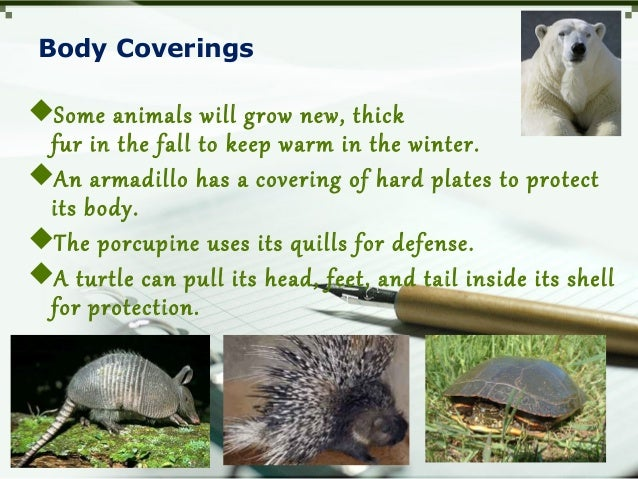 Body Coverings Some animals will grow new, thick fur in the fall to keep warm in the winter. An armadillo has a covering...