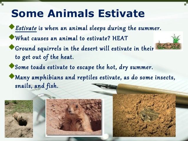 Some Animals Estivate Estivate is when an animal sleeps during the summer. What causes an animal to estivate? HEAT Grou...