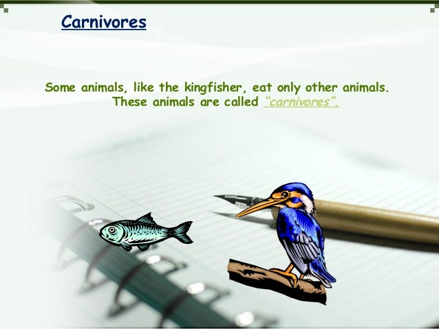 """Carnivores Some animals, like the kingfisher, eat only other animals. These animals are called """"carnivores""""."""
