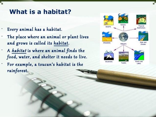 Habitats for plants and animals Slide 3