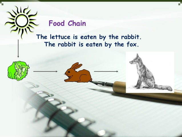 Food Chain The lettuce is eaten by the rabbit. The rabbit is eaten by the fox.