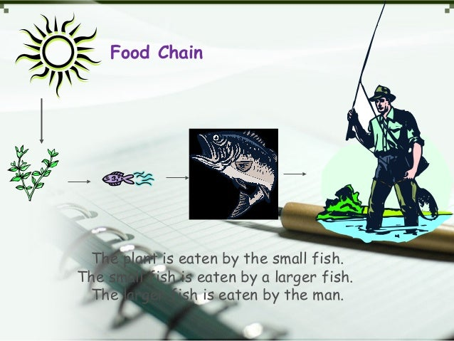 Food Chain The plant is eaten by the small fish. The small fish is eaten by a larger fish. The larger fish is eaten by the...