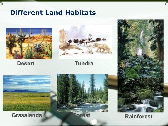 Different Land Habitats Rainforest TundraDesert ForestGrasslands