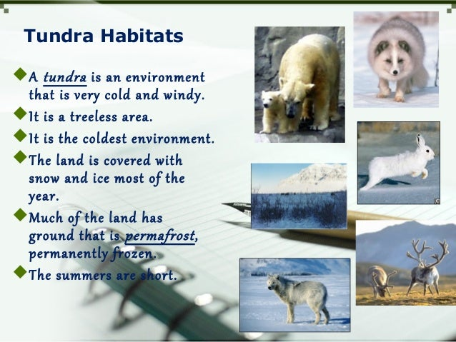 Tundra Habitats A tundra is an environment that is very cold and windy. It is a treeless area. It is the coldest enviro...