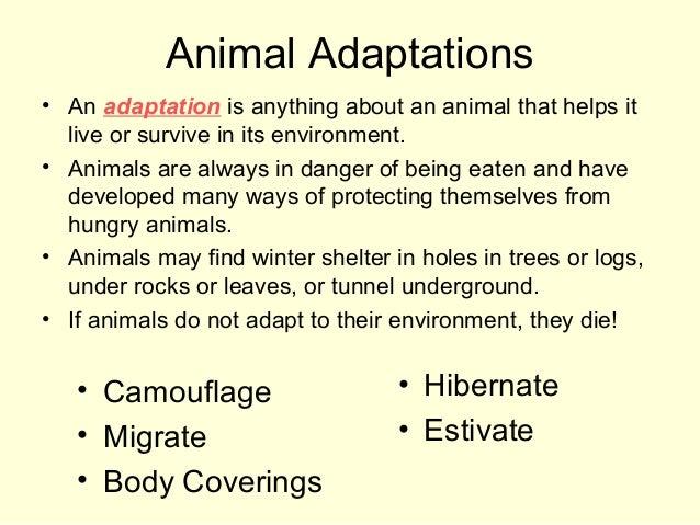 animals that hibernate in winter clipart