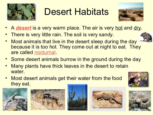 desert plants and animals Desert plants most desert species have found remarkable ways to survive by evading drought desert succulents, such as cacti or rock plants (lithops) for example.