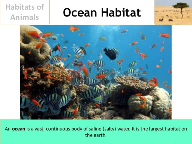 ocean habitats The ocean is not just one habitat, it is many habitats some ocean habitats get lots of sun and some get none we can classify ocean habitats by the amount of.