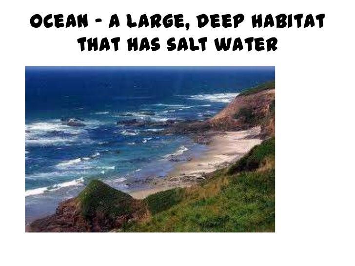 Ocean – a large, deep habitat    that has salt water