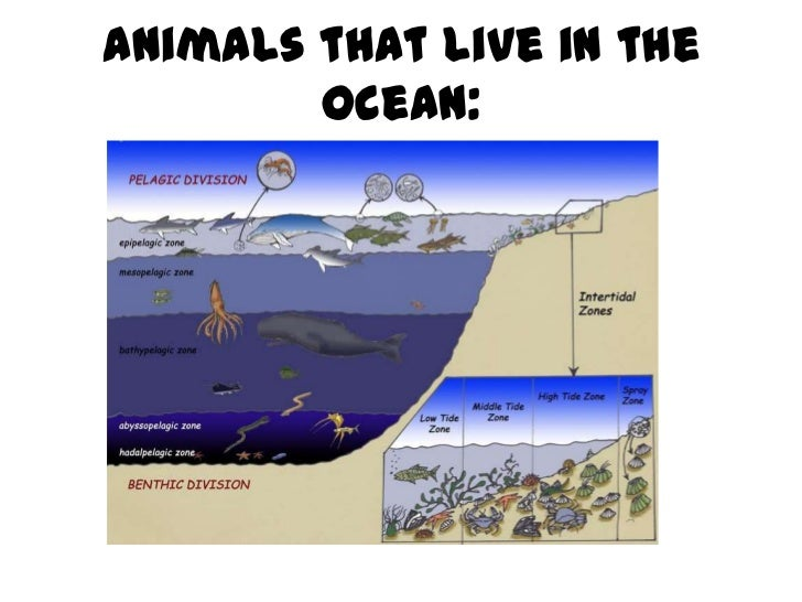 Animals that live in the        ocean: