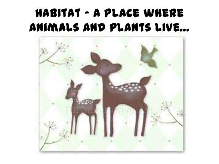 Habitats powerpoint Slide 2