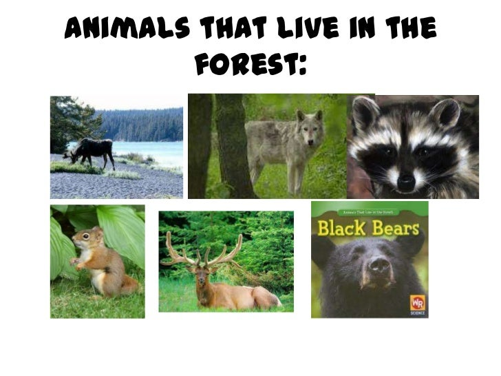 Animals that live in the       forest: