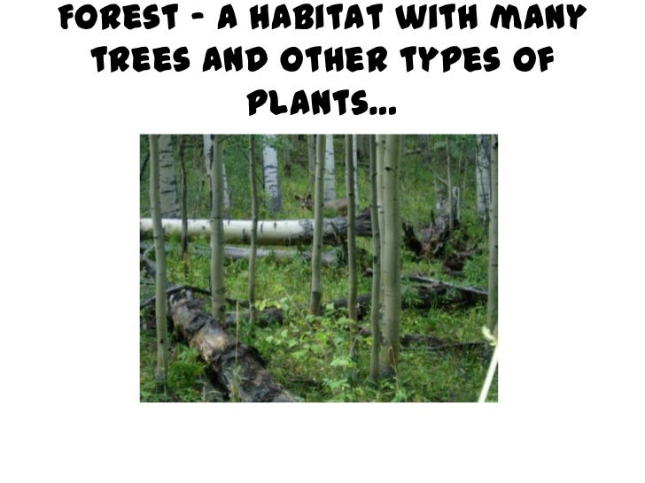 Forest – a habitat with many  trees and other types of           plants…