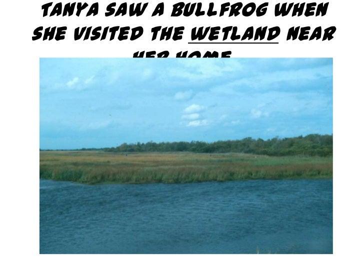 Tanya saw a bullfrog whenshe visited the wetland near          her home.